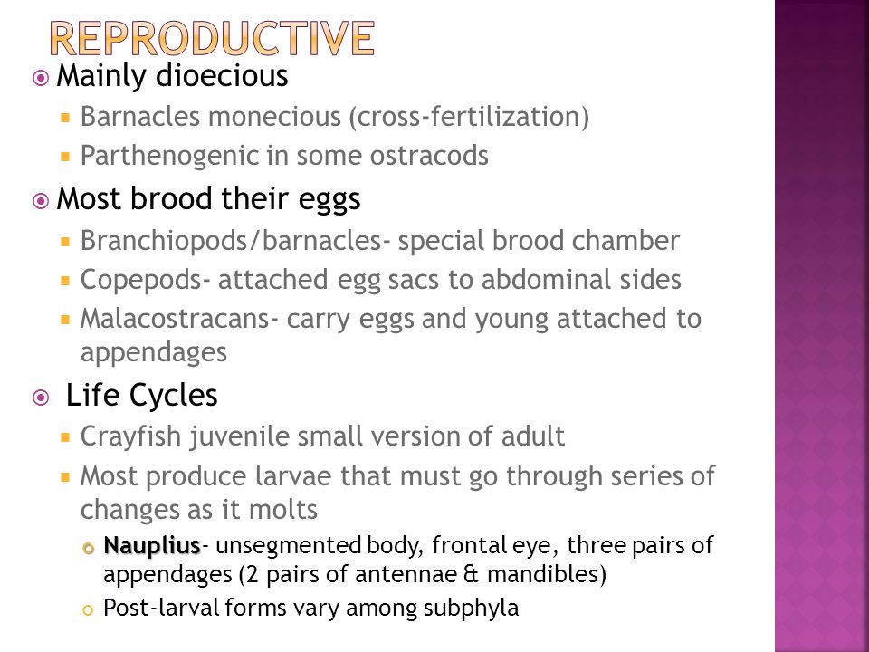 Reproductive Mainly dioecious Most brood their eggs Life Cycles