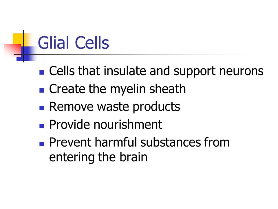 Glial Cells Cells that insulate and support neurons