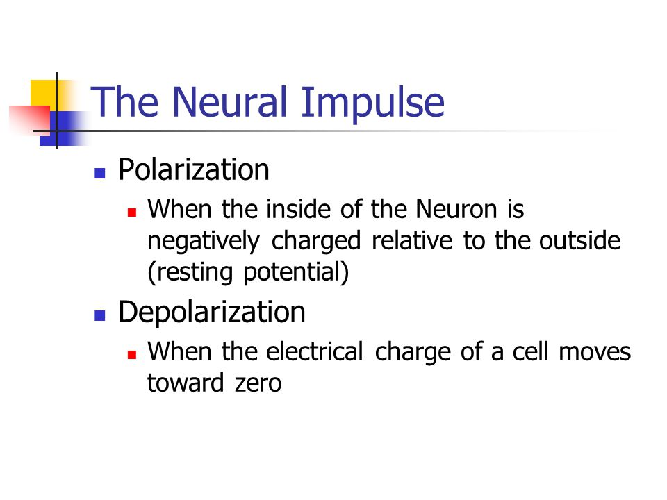 The Neural Impulse Polarization Depolarization