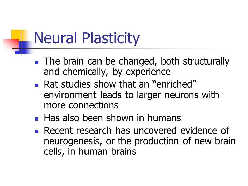 Neural Plasticity The brain can be changed, both structurally and chemically, by experience.