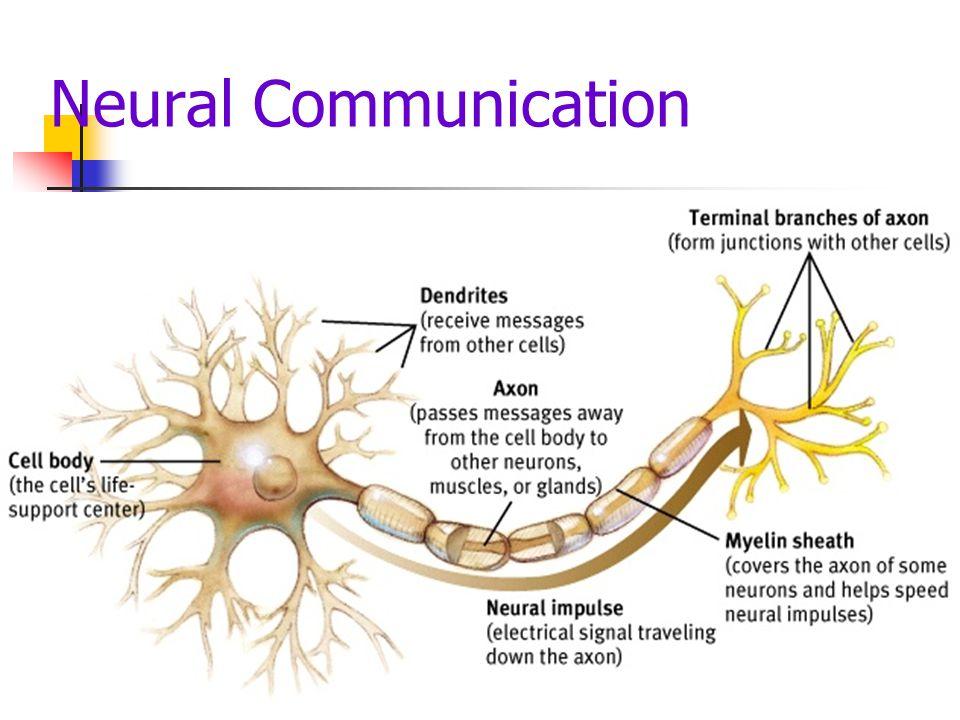 Neural Communication