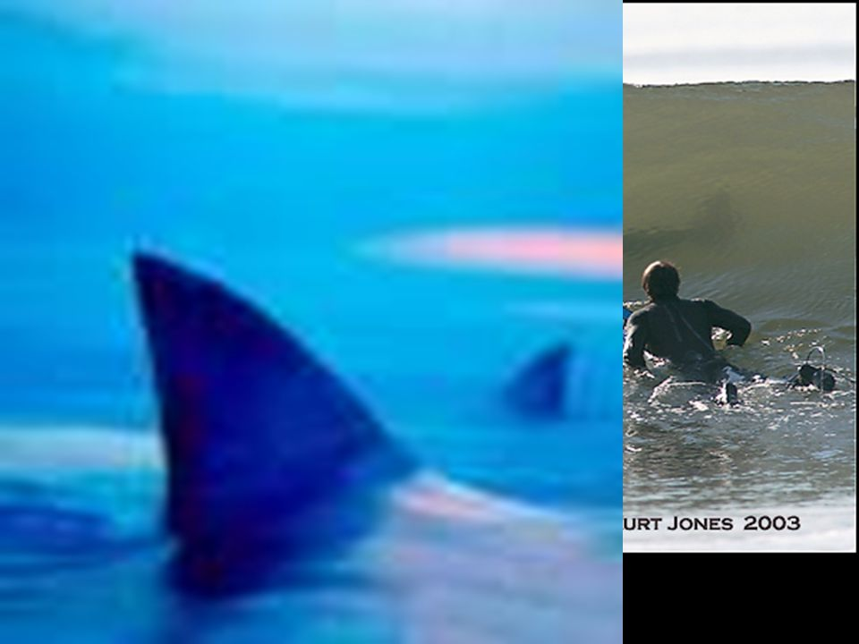 10) fins do not bend; used for braking and steering; dorsal fin most noticeable -> keeps shark from spinning.