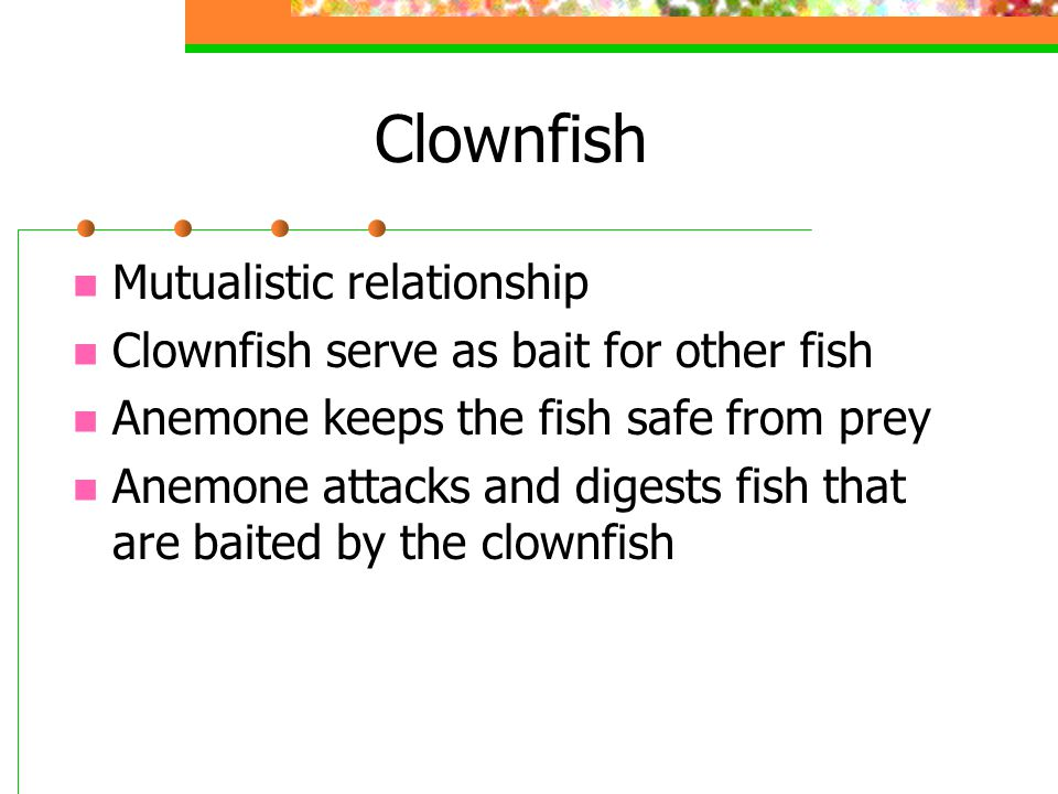 Clownfish Mutualistic relationship