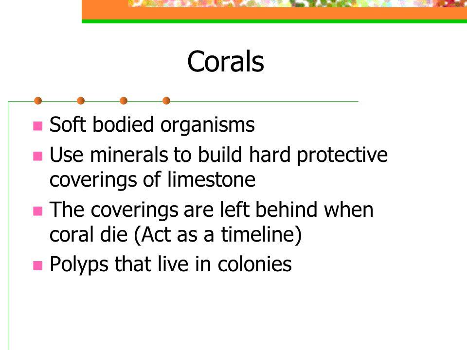 Corals Soft bodied organisms