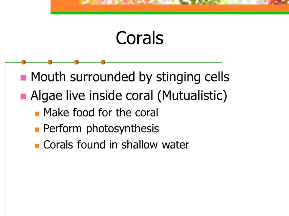 Corals Mouth surrounded by stinging cells