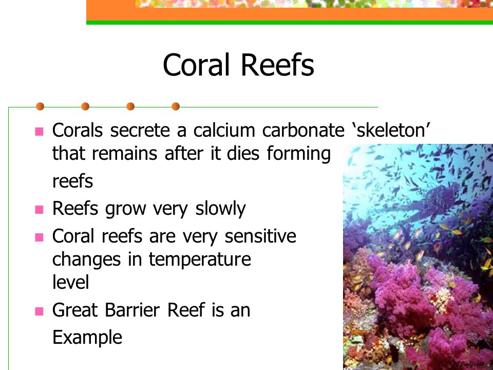 Coral Reefs Corals secrete a calcium carbonate 'skeleton' that remains after it dies forming. reefs.