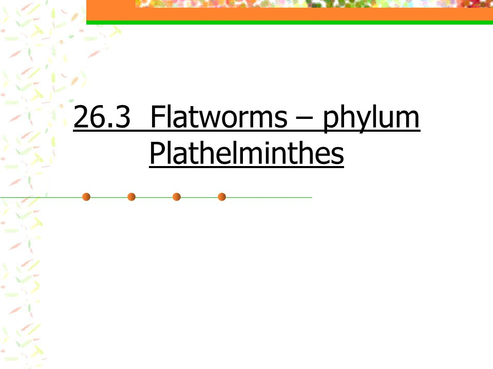 26.3 Flatworms – phylum Plathelminthes