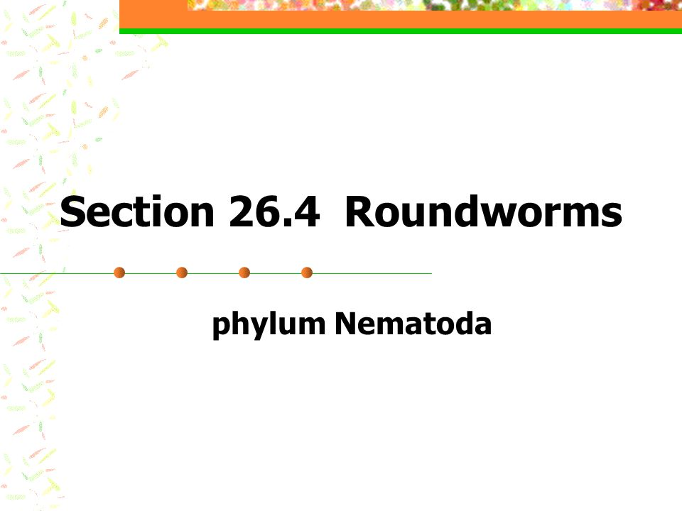 Section 26.4 Roundworms phylum Nematoda