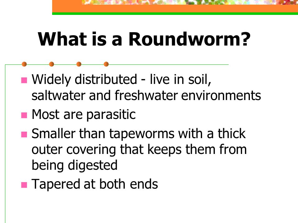 What is a Roundworm Widely distributed - live in soil, saltwater and freshwater environments. Most are parasitic.