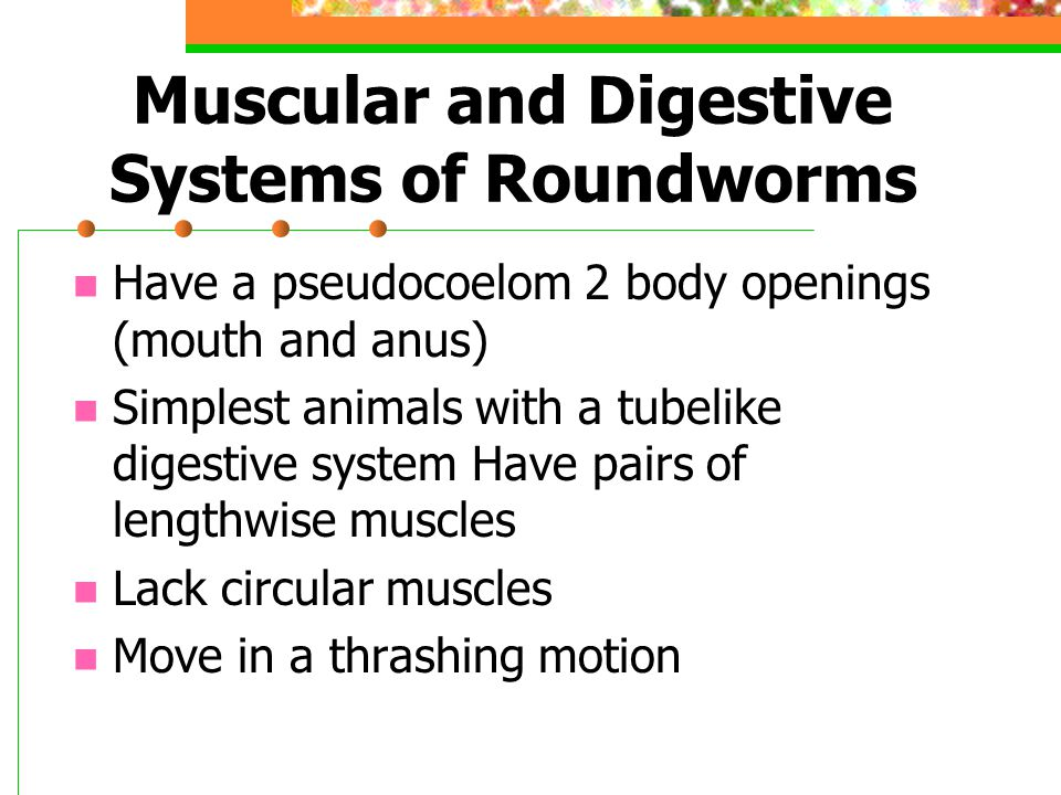 Muscular and Digestive Systems of Roundworms