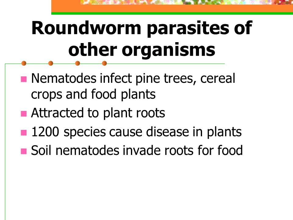 Roundworm parasites of other organisms