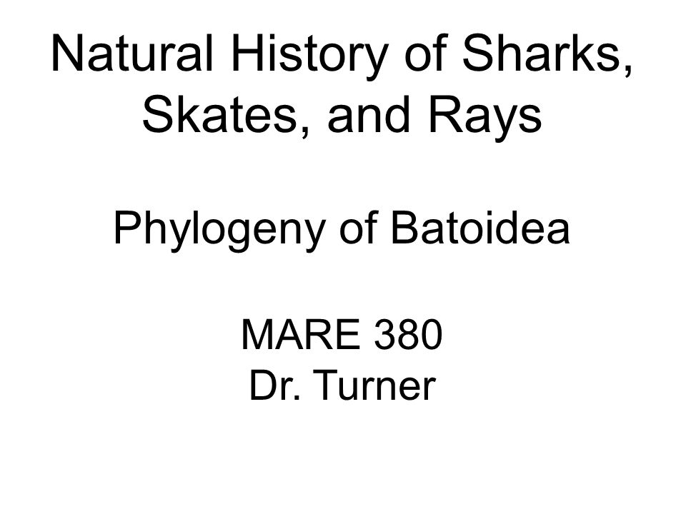 Natural History of Sharks, Skates, and Rays