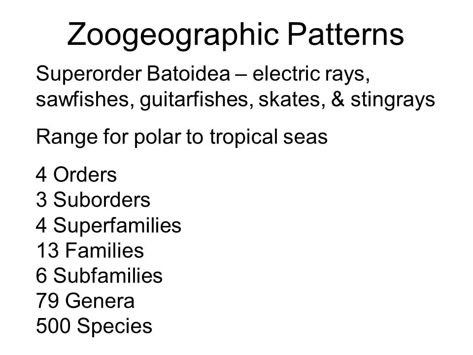 Zoogeographic Patterns
