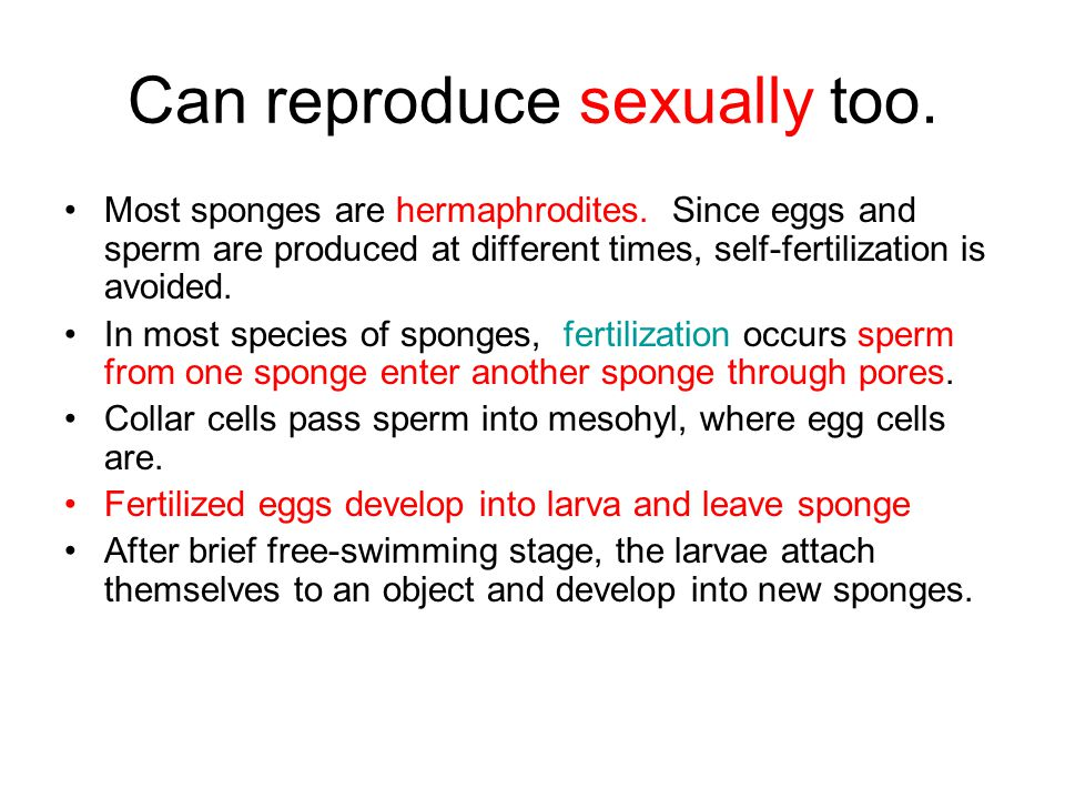 Can reproduce sexually too.