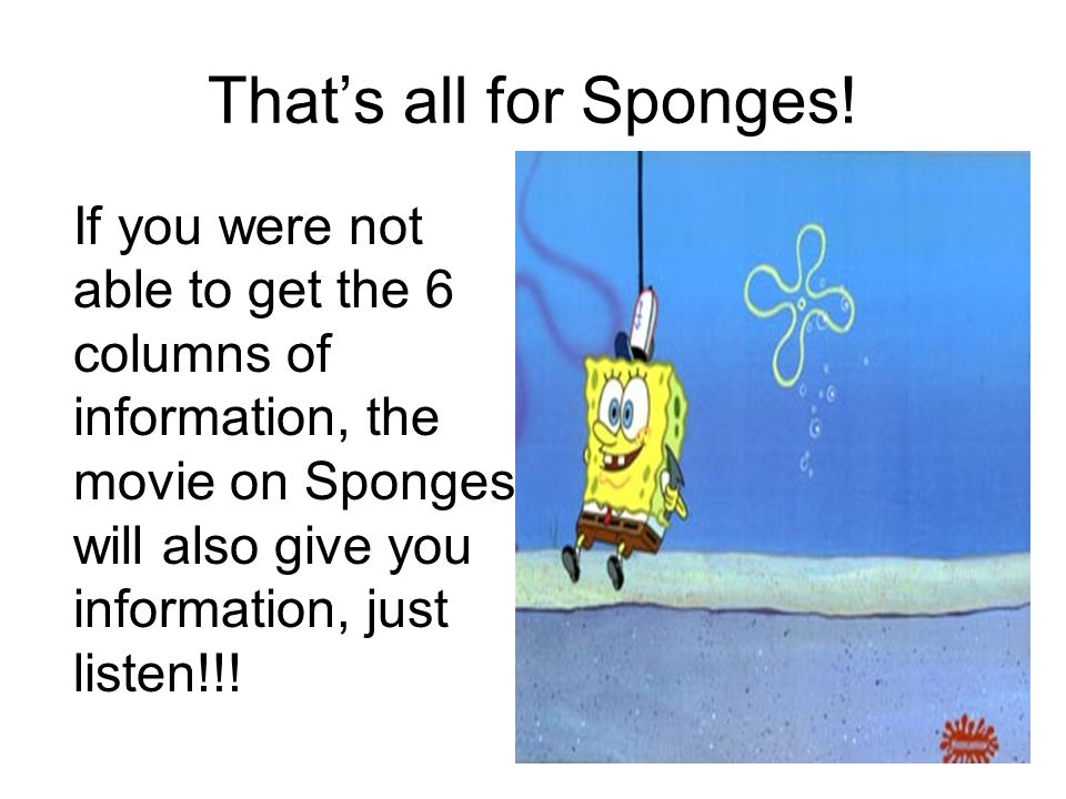 That's all for Sponges.