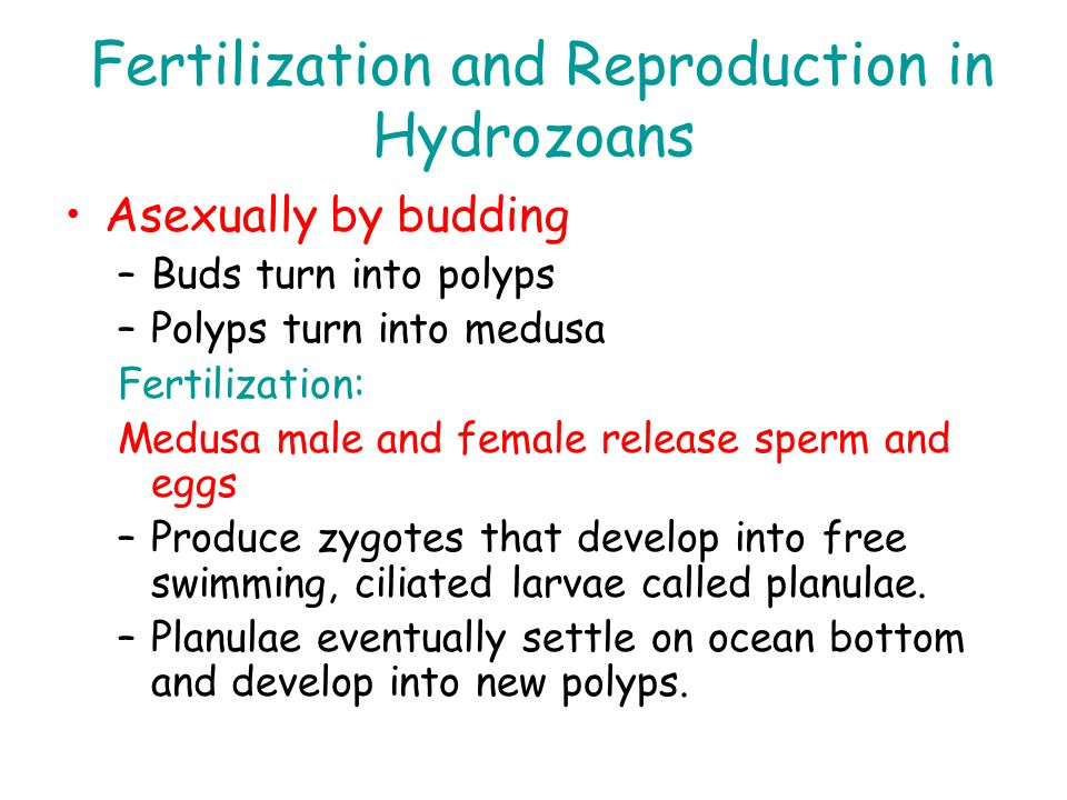 Fertilization and Reproduction in Hydrozoans