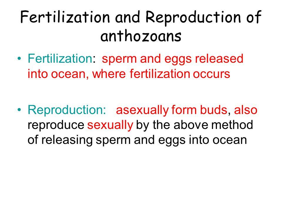 Fertilization and Reproduction of anthozoans