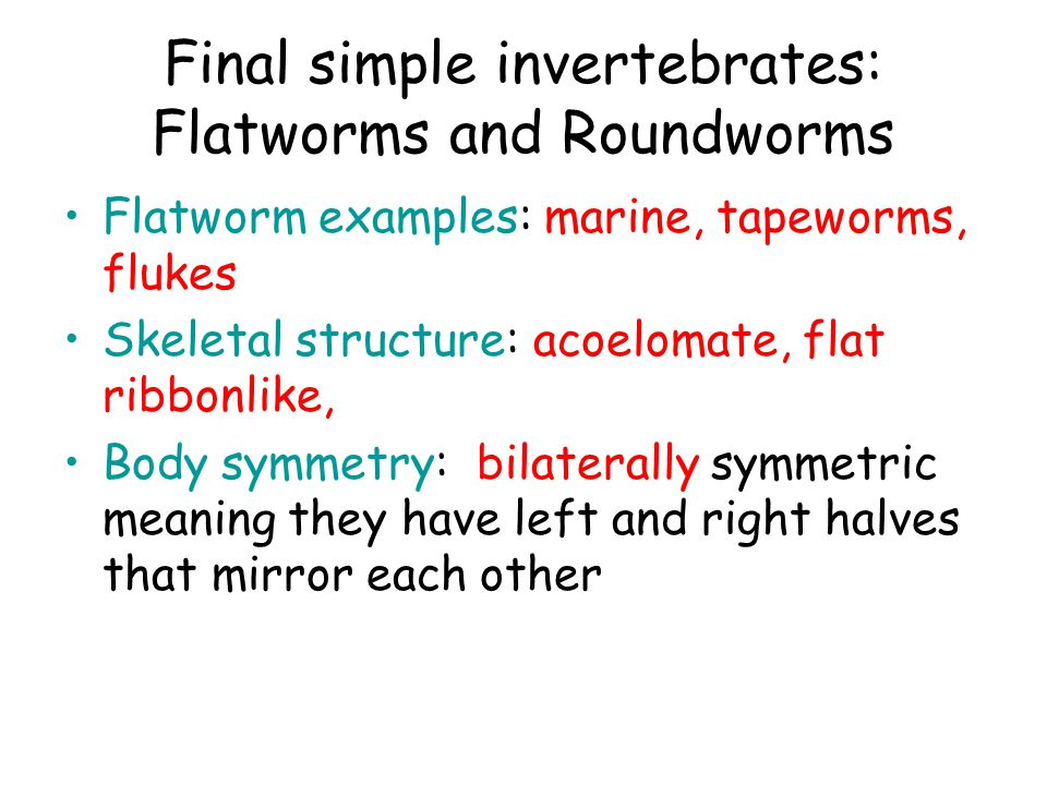 Final simple invertebrates: Flatworms and Roundworms