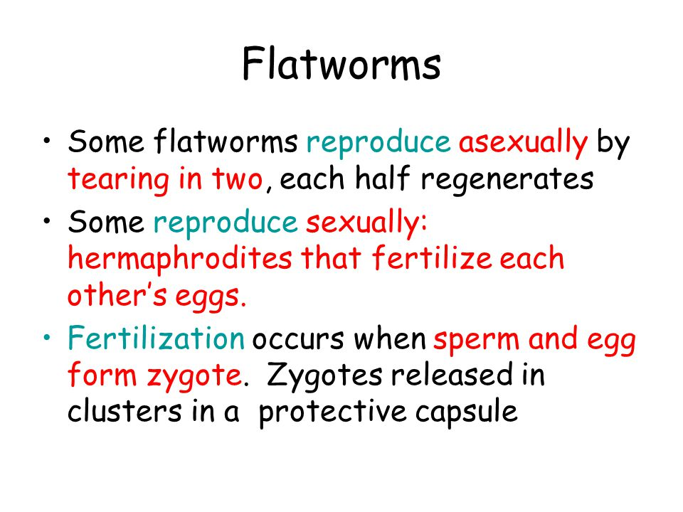 Flatworms Some flatworms reproduce asexually by tearing in two, each half regenerates.