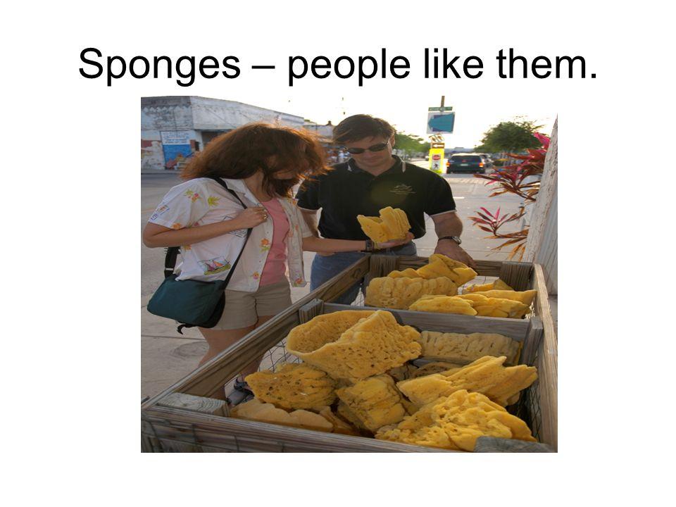 Sponges – people like them.
