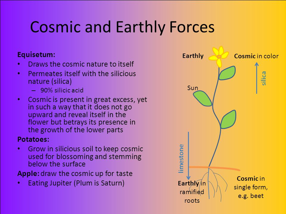 Cosmic and Earthly Forces