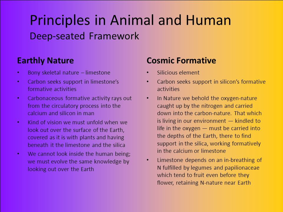 Principles in Animal and Human Deep-seated Framework
