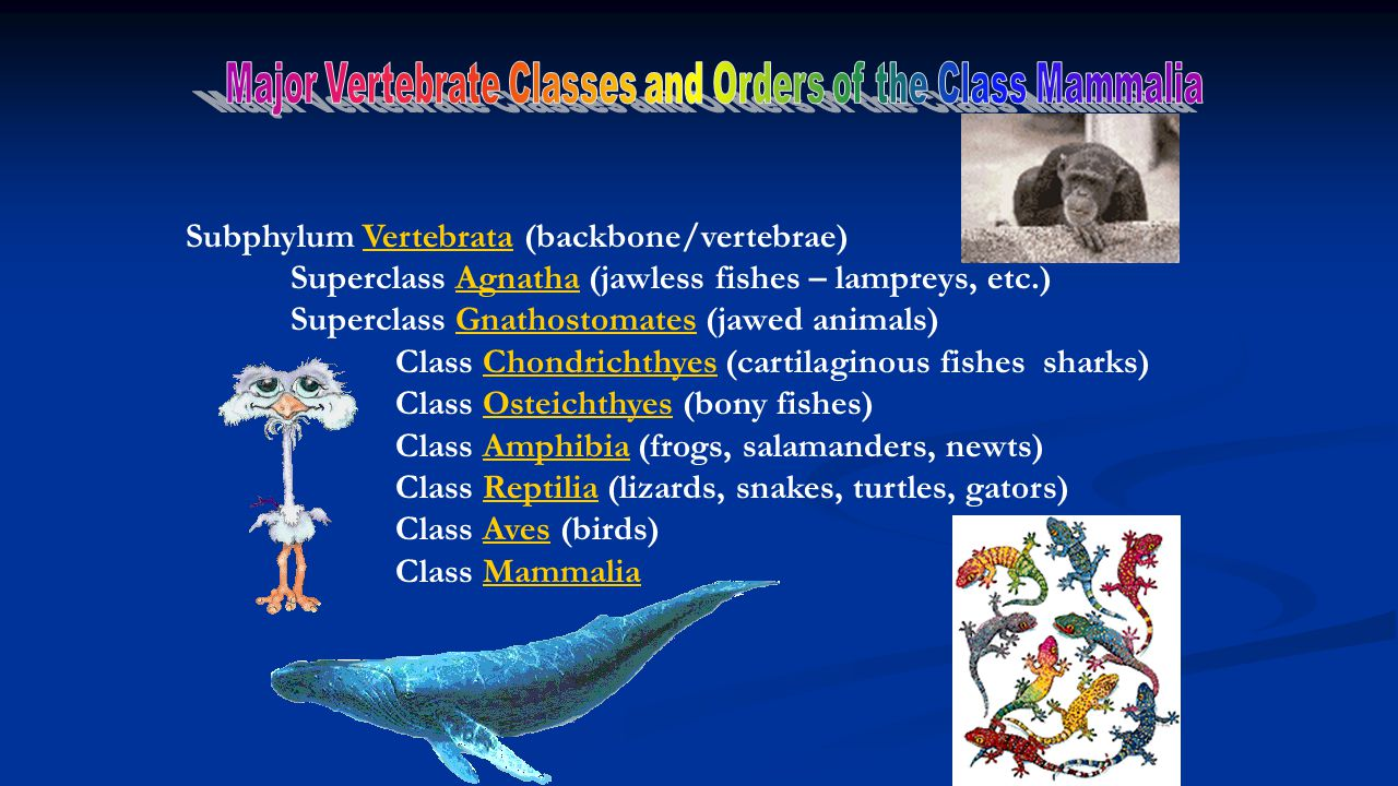 Major Vertebrate Classes and Orders of the Class Mammalia