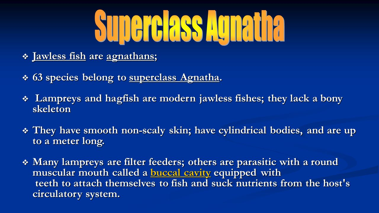 Superclass Agnatha Jawless fish are agnathans;