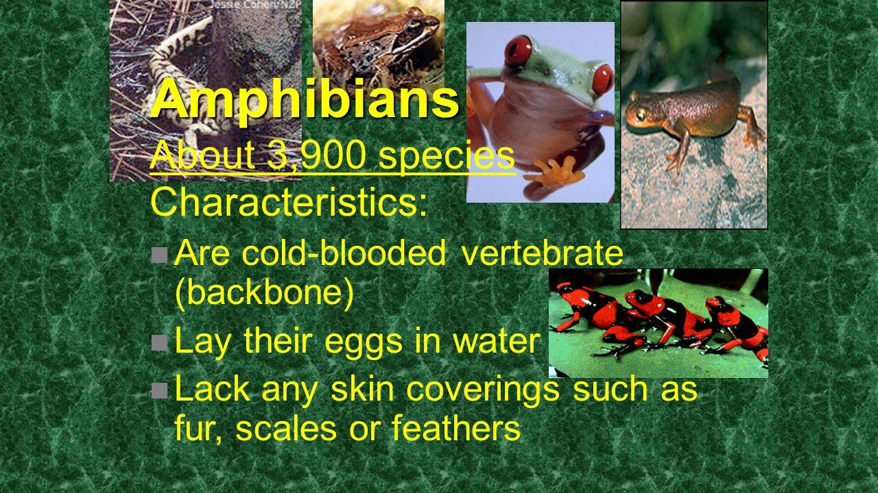 Amphibians About 3,900 species