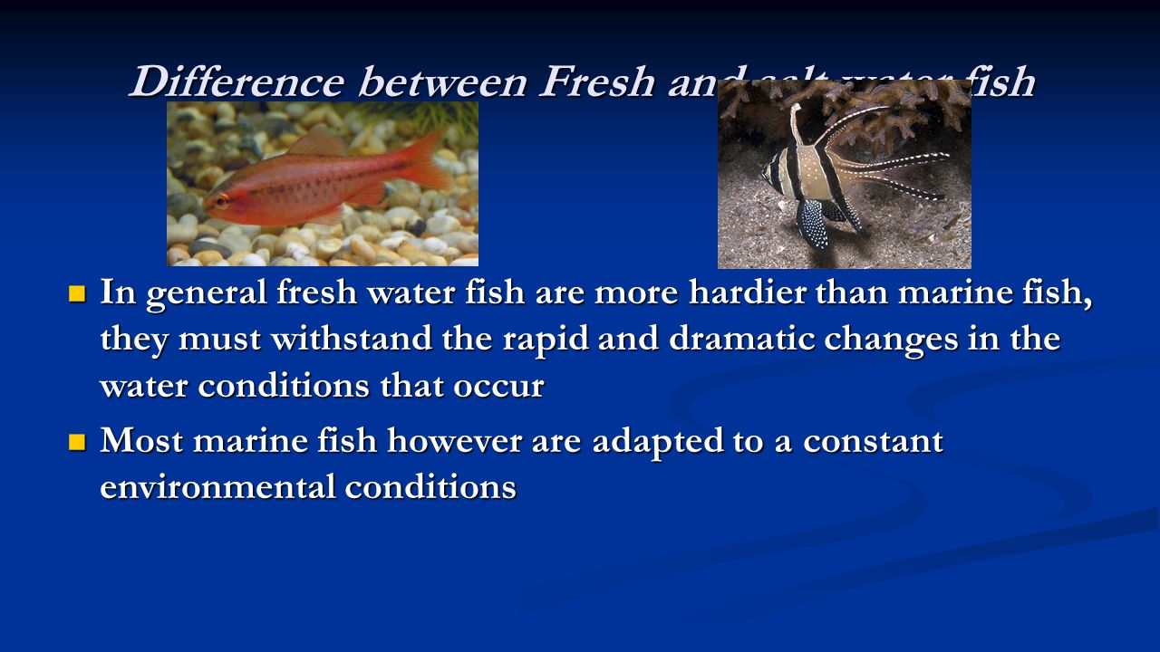 Difference between Fresh and salt water fish