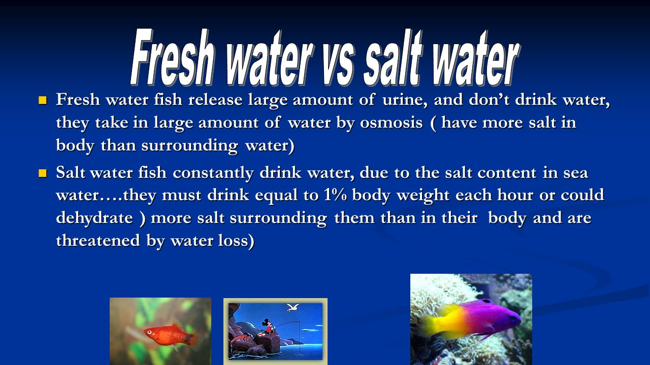 Fresh water vs salt water