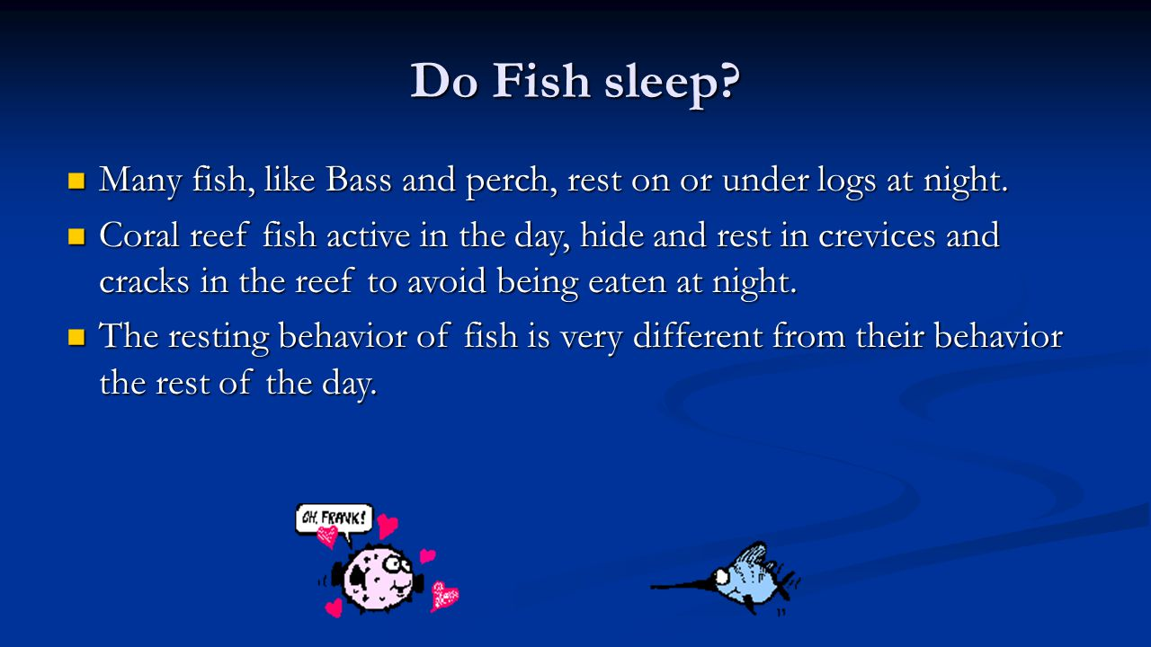 Do Fish sleep Many fish, like Bass and perch, rest on or under logs at night.