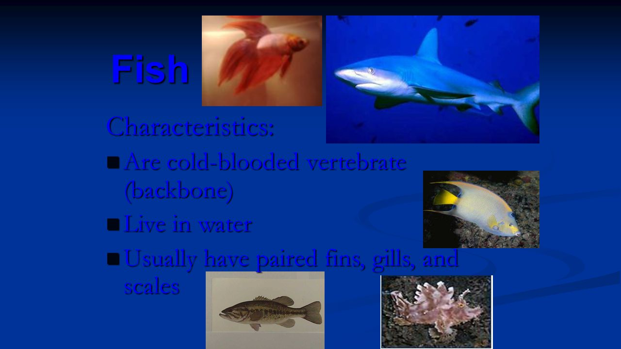 Fish Characteristics: Are cold-blooded vertebrate (backbone)