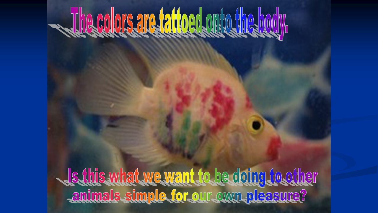 The colors are tattoed onto the body.