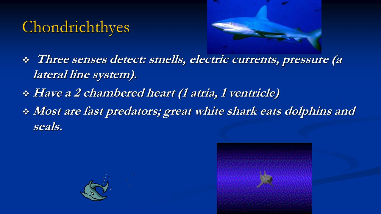 Chondrichthyes Three senses detect: smells, electric currents, pressure (a lateral line system). Have a 2 chambered heart (1 atria, 1 ventricle)