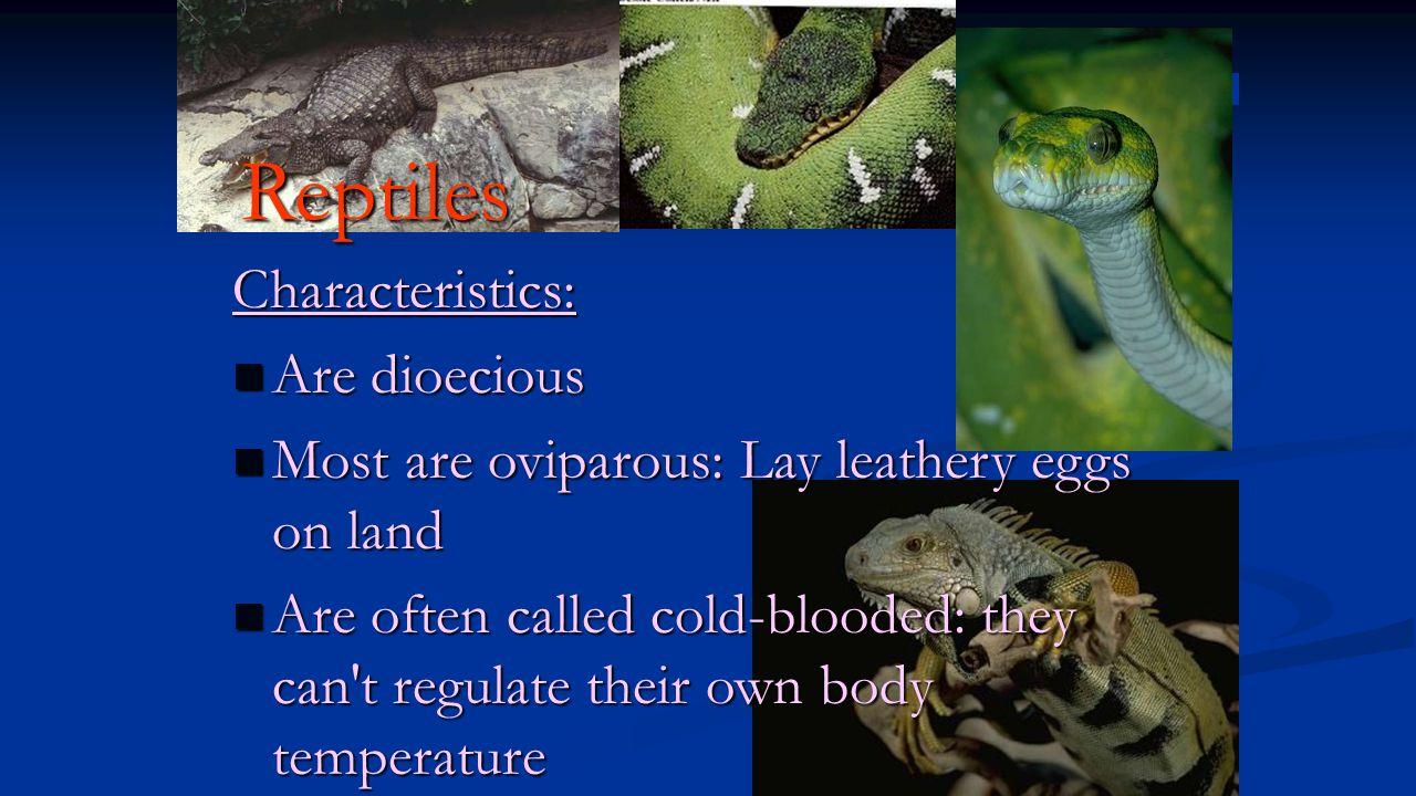 Reptiles Characteristics: Are dioecious