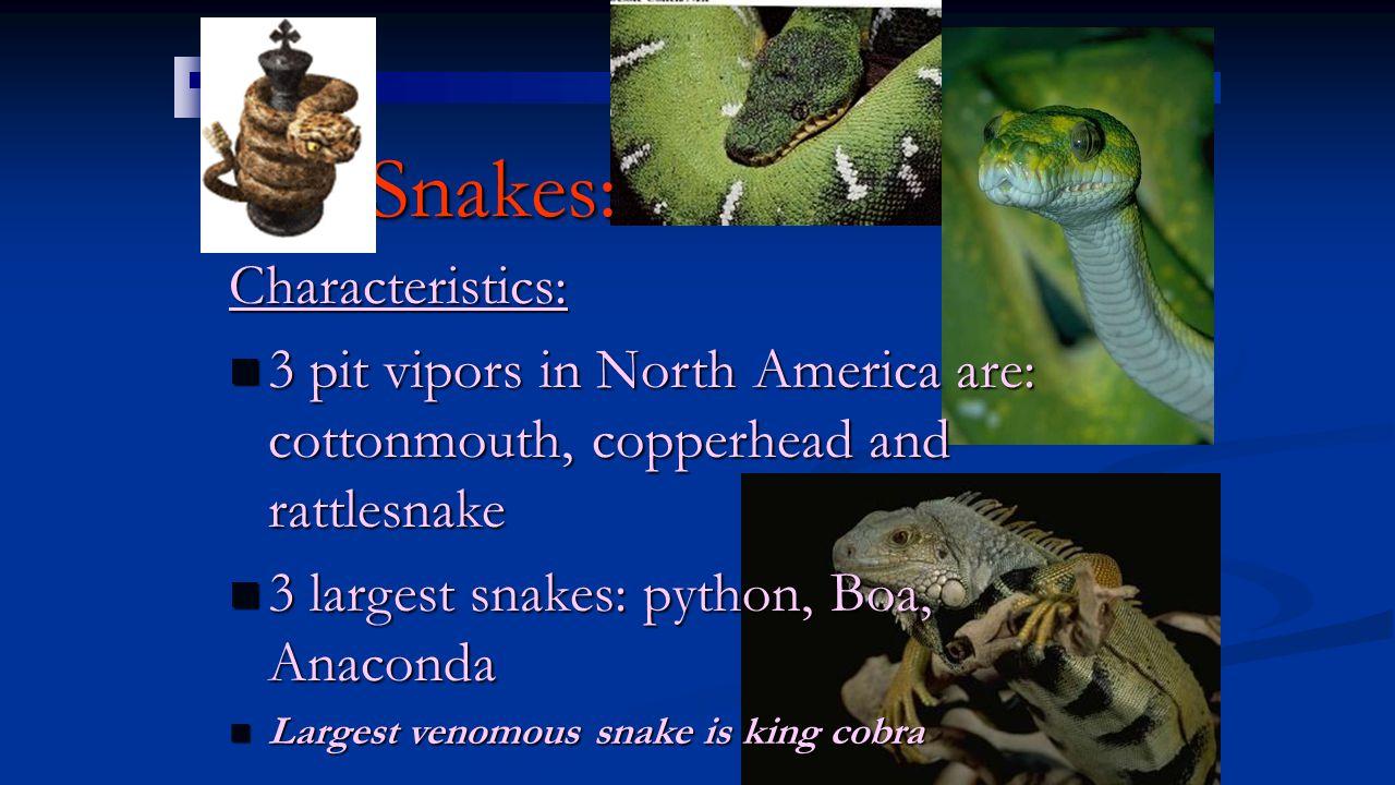Snakes: Characteristics: