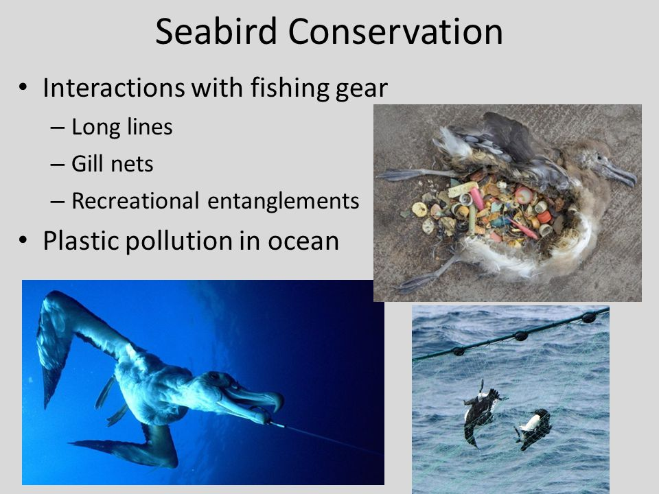 Seabird Conservation Interactions with fishing gear