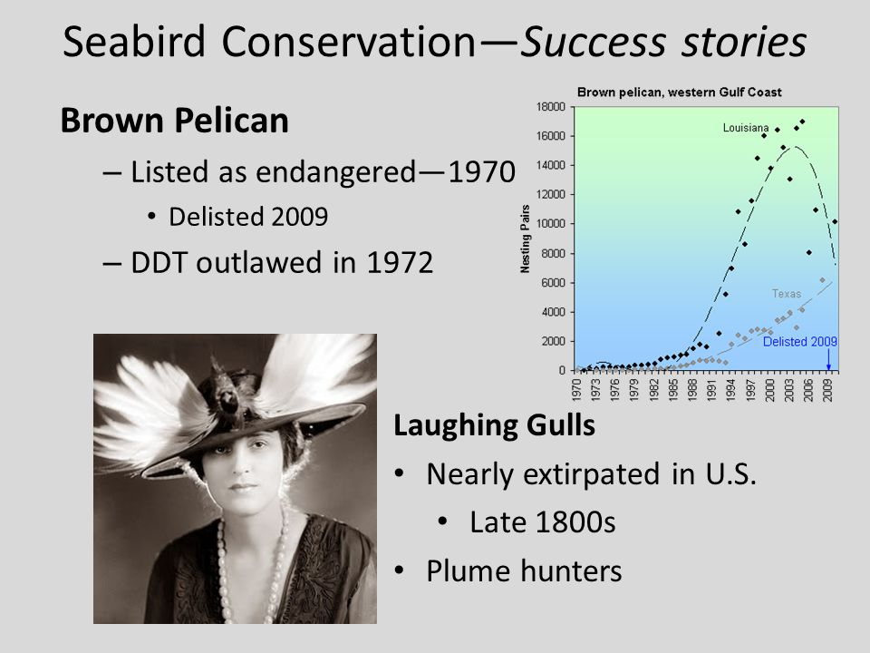 Seabird Conservation—Success stories