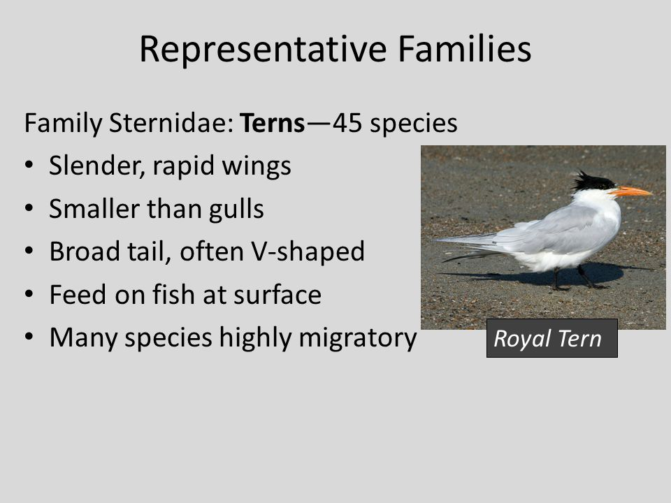 Representative Families