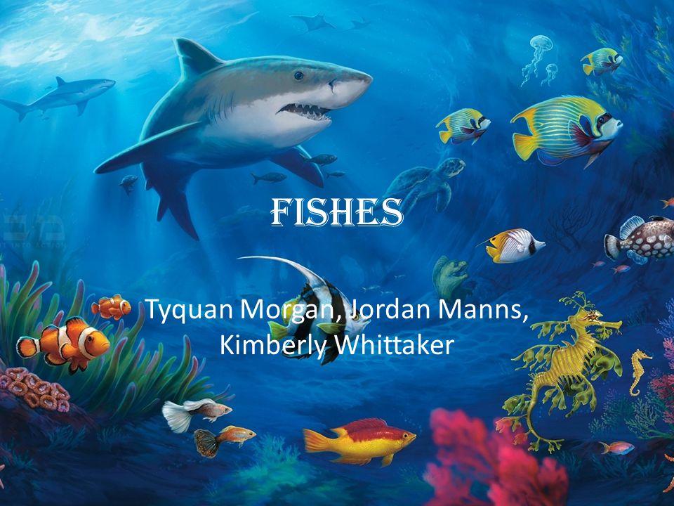 Tyquan Morgan, Jordan Manns, Kimberly Whittaker