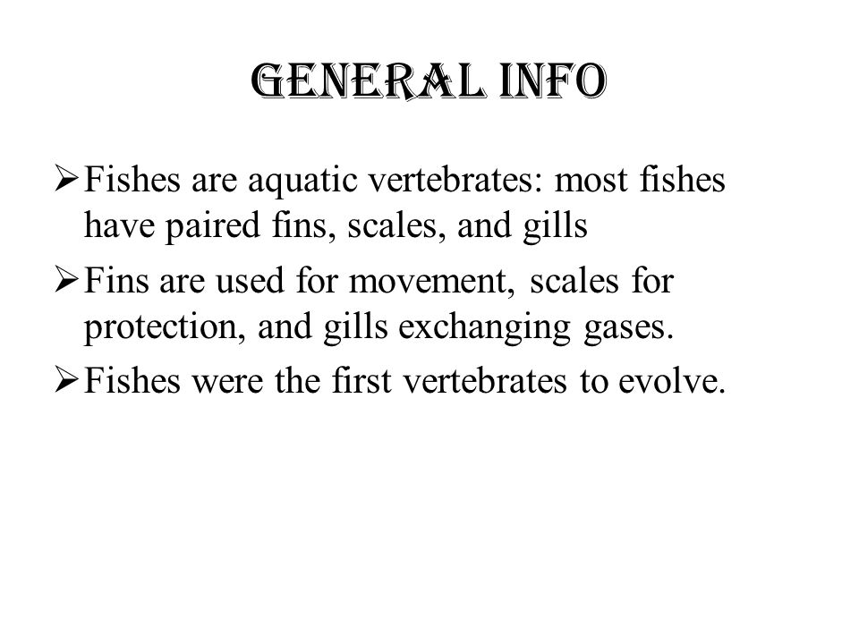 General Info Fishes are aquatic vertebrates: most fishes have paired fins, scales, and gills.