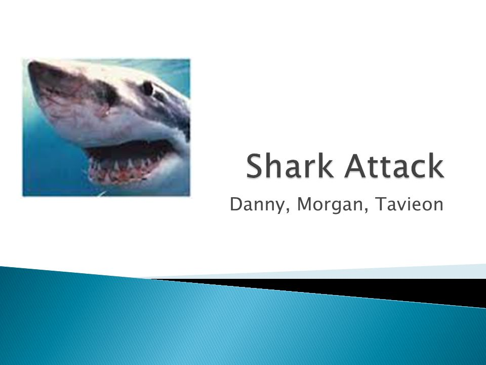 Shark Attack Danny, Morgan, Tavieon