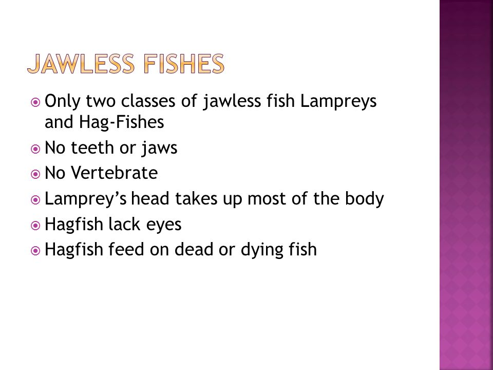 Jawless fishes Only two classes of jawless fish Lampreys and Hag-Fishes. No teeth or jaws. No Vertebrate.