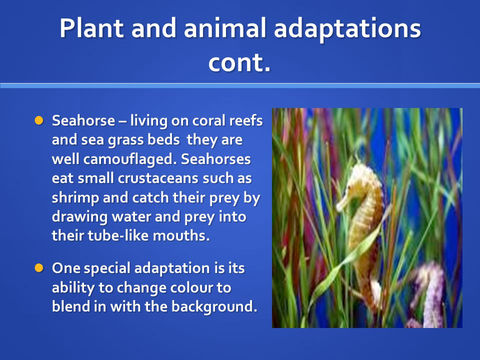 Plant and animal adaptations cont.