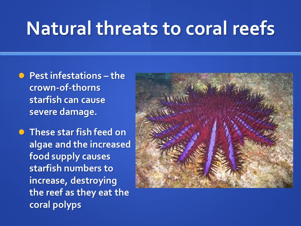 Natural threats to coral reefs