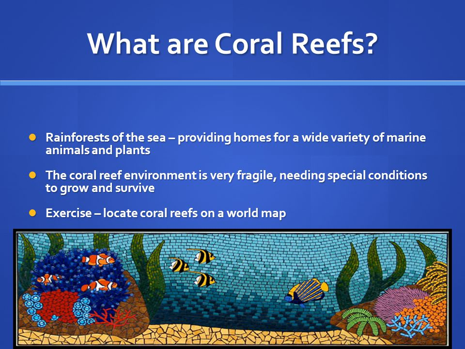 What are Coral Reefs Rainforests of the sea – providing homes for a wide variety of marine animals and plants.