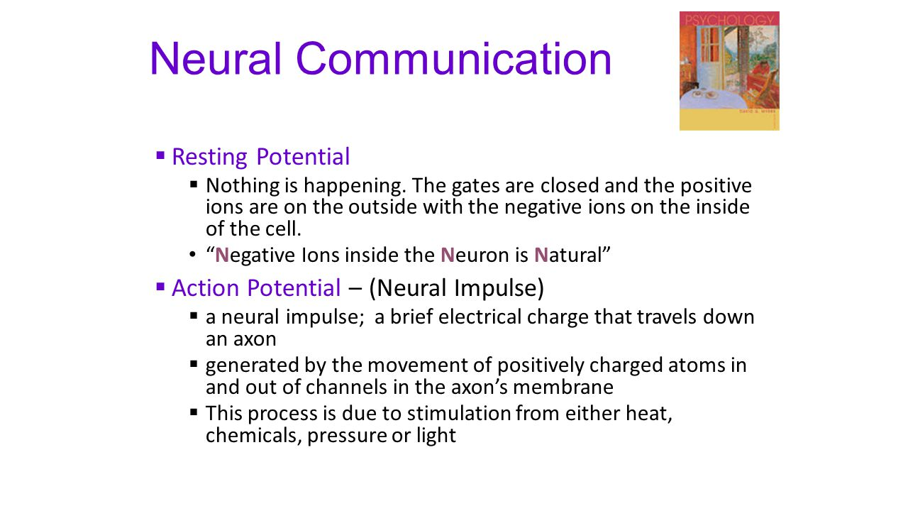 Neural Communication Resting Potential