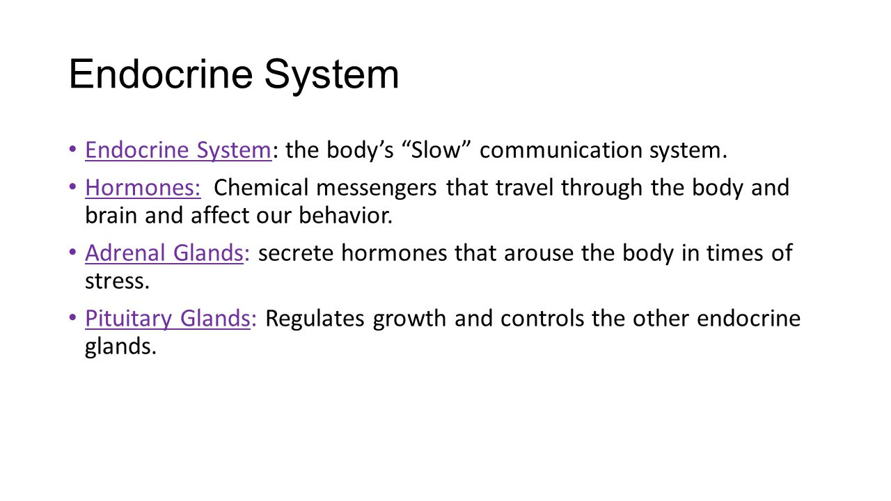 Endocrine System Endocrine System: the body's Slow communication system.