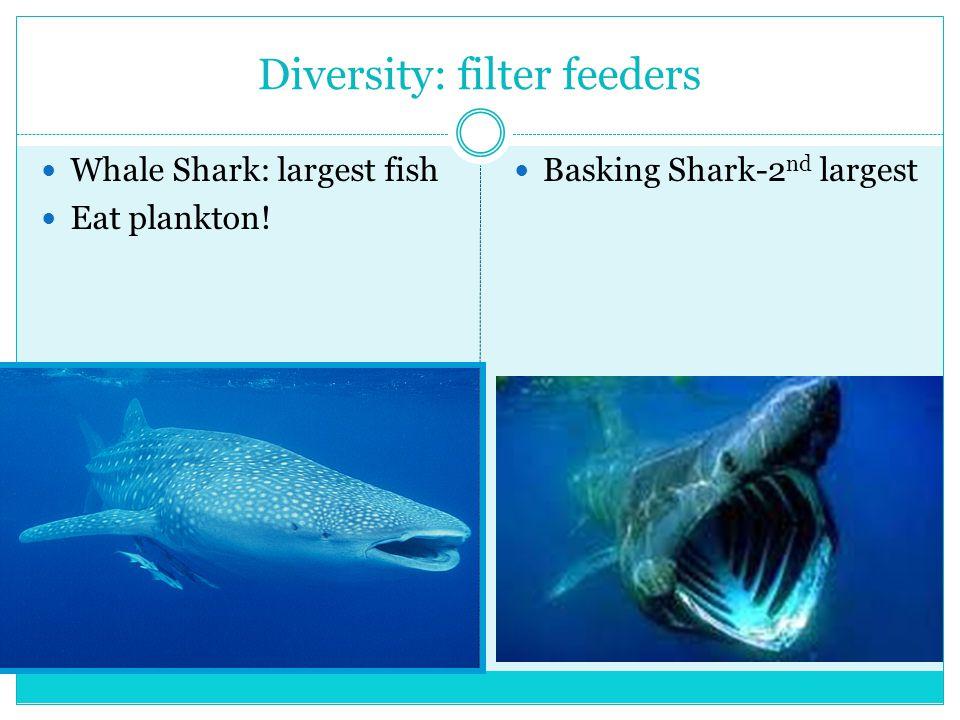 Diversity: filter feeders